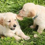 2匹のワンちゃん。犬