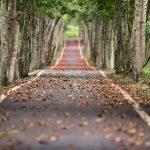 緑あふれる並木道