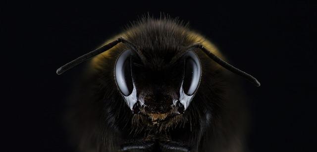 スズメバチの正面