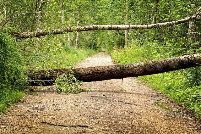 行く手を塞ぐ倒れた木