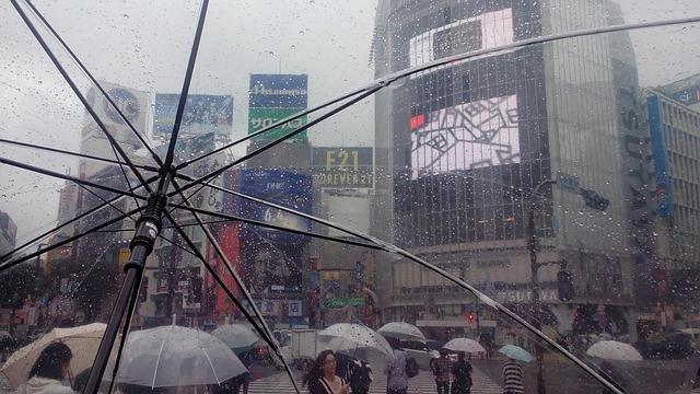雨の渋谷のスクランブル交差点